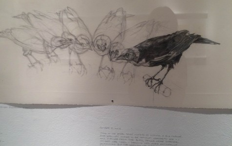 Audubon's Birds Fly into the Gallery